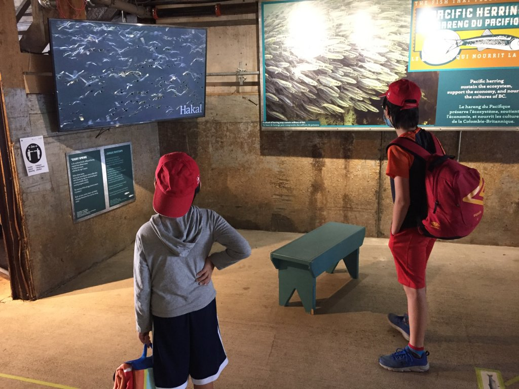 Bảo tàng nói về di cư cá trích.JPG
