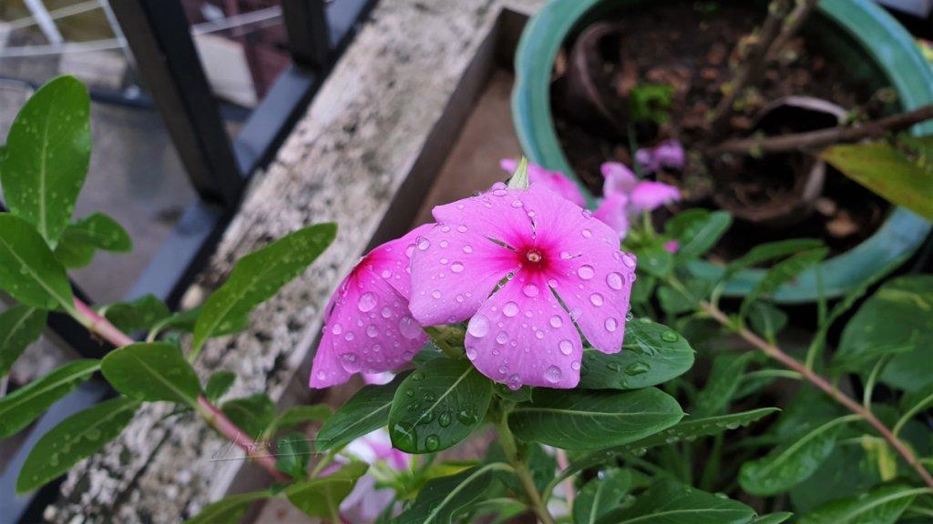 TVH's pic - Flower - 111220 (1).jpg
