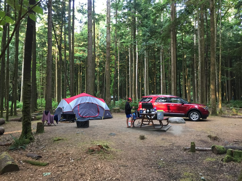 Buổi sáng sớm trong rừng.JPG