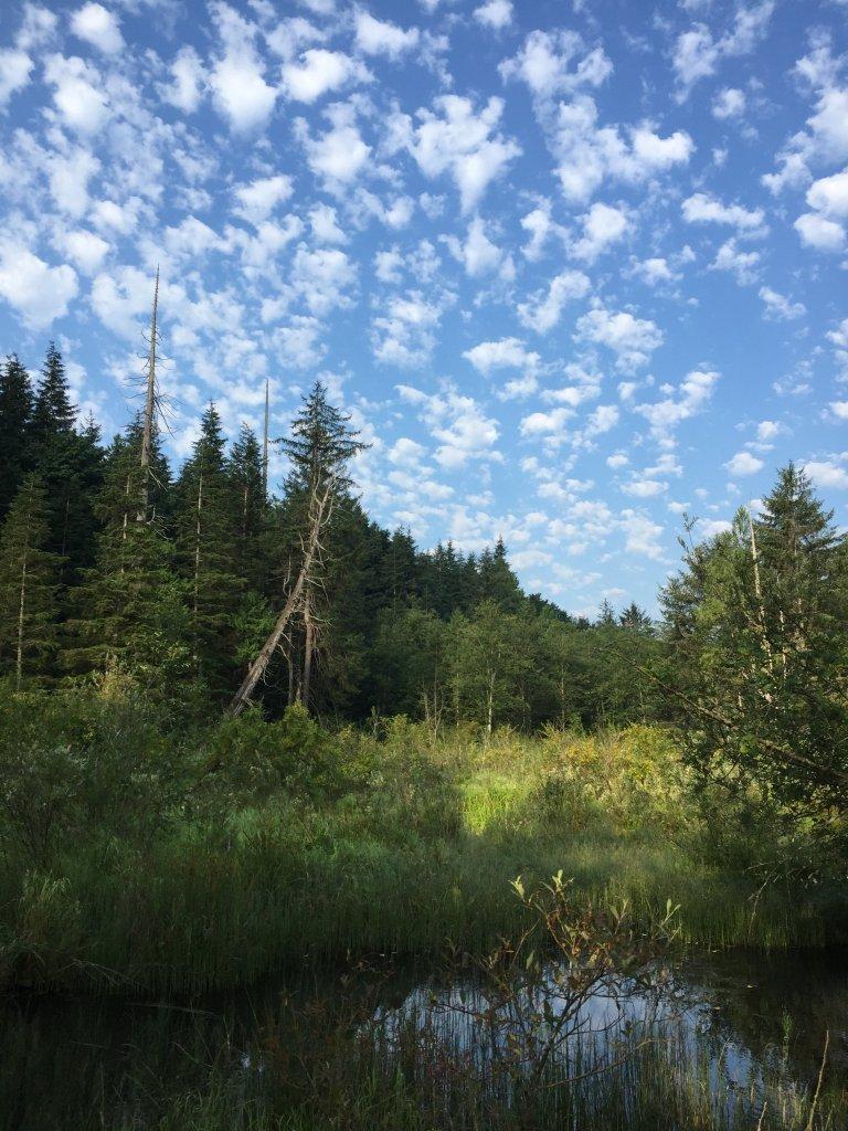 khung cảnh bên hồ 1.JPG